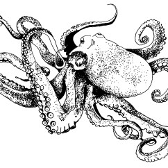Giant Octopus Diagram Aiphone Lef 3l Wiring And Schematics Drawing Of The Week  Studioten15