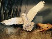 Carol Schmedinghoff, Snowy Owl, hand carved owl wings spread