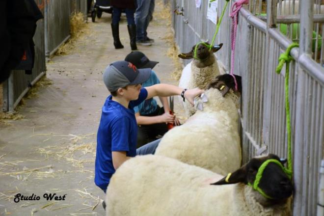 Agribition 3