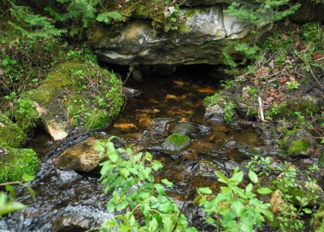 Stream to Grass River
