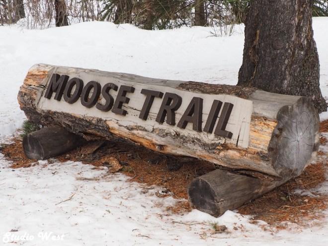 Cypress Hills Moose Trail