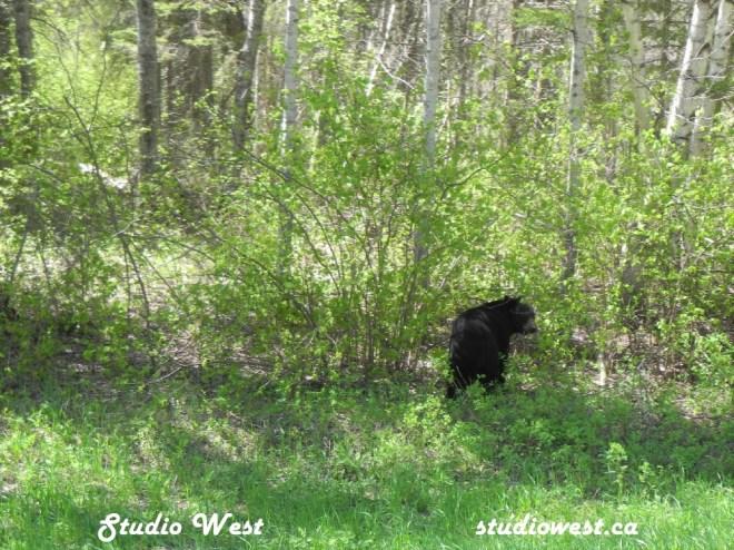 Bear DSCN5079