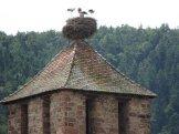 bocian - symbol Alzacji - spotkasz go tu wszędzie