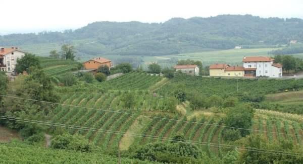kristancic-winnice