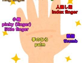 5本の指の名は英語で?手のひら・手の甲は英語で?手相占いは英語でなんていう?