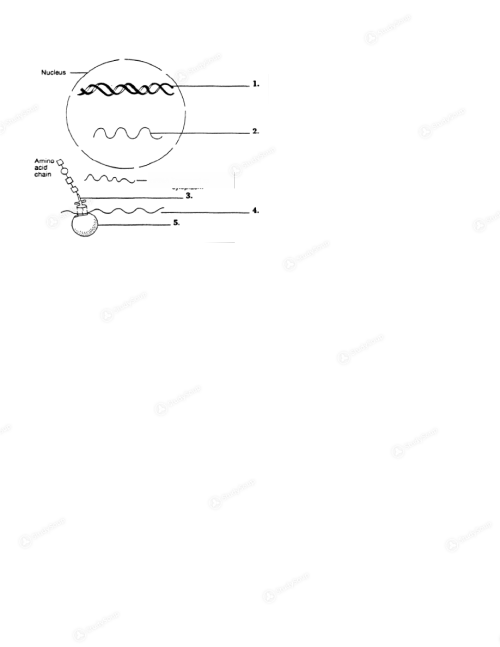 small resolution of background image label the following diagram