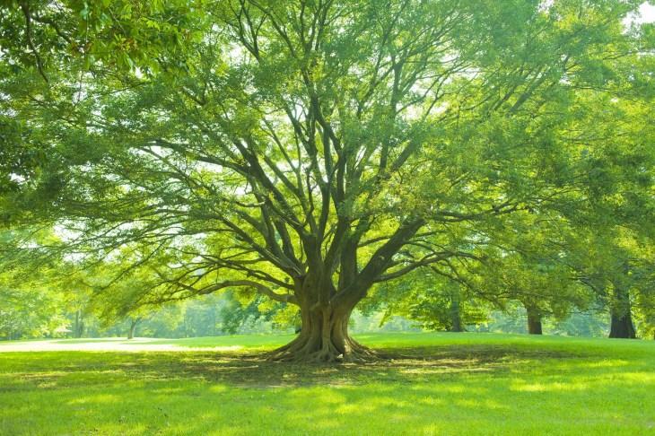 ず 見 て を 見 意味 を 森 木