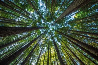 5分でわかる森林の階層構造!生態系の重要概念?各層の役割や特徴とは?現役理系学生ライターがわかりやすく解説!