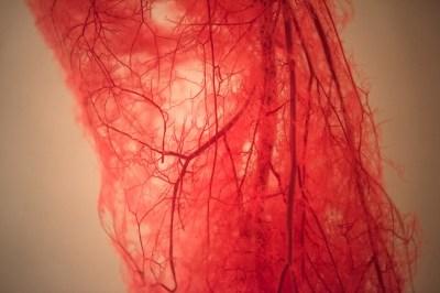 5分で分かる「動脈」と「静脈」血液はどのように全身に運ばれる?毛細血管って?東大生物学科卒が分かりやすく解説