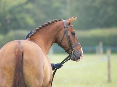 【慣用句】「馬の背を分ける」の意味や使い方は?例文や類語を元予備校講師が解説!