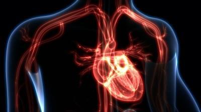 5分で分かる「体循環」と「肺循環」血液はどのように体を巡っている?東大生物学科卒が分かりやすく解説