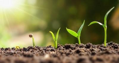 5分でわかる「オーキシン」植物の成長に欠かせない植物ホルモン?理系ライターがわかりやすく解説