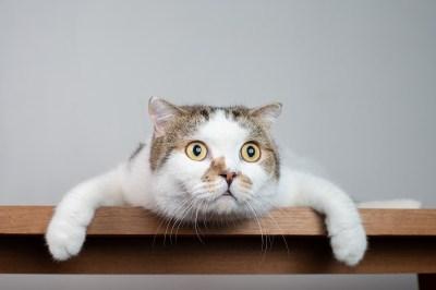 バター猫のパラドックスとは?現役理系ライターが5分で分かるように説明してみた