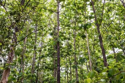 雨緑樹林はどんなところ?どんな動物がいる?現役講師がバイオームをわかりやすく解説