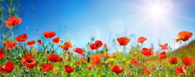 【慣用句】「花が咲く」の意味や使い方は?例文や類語を元新聞記者が解説!