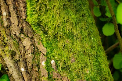 コケ植物にはどんな特徴がある?現役講師がさくっと解説!