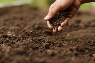 5分でわかる「窒素の循環」生物から土壌、大気へと循環する?現役講師が流れをサクッと解説します