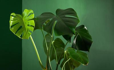 植物の「厚壁組織」って何?細胞壁と何が違うの?現役講師が5分で解説!