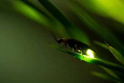 生き物が光る!?「生物発光」の例と仕組みを現役講師が解説!
