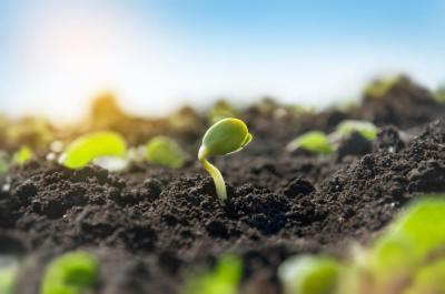 植物の種子にある「胚乳」って何?胚乳のある植物・ない植物は?現役講師が解説します!