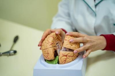 5分でわかる「間脳の機能」ストレスや生活リズムが及ぼす影響を現役理系大学院生が解説!