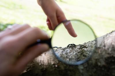 【ことわざ】「一寸の虫にも五分の魂」の意味や使い方は?例文や類語を元広報紙編集者が解説!
