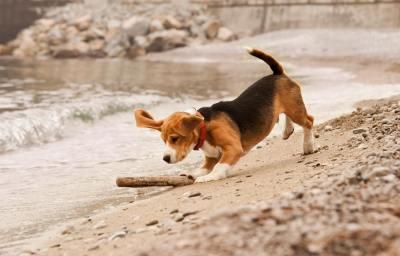 【慣用句】「犬も歩けば棒に当たる」の意味や使い方は?例文や類語を雑学大好きwebライターが解説!