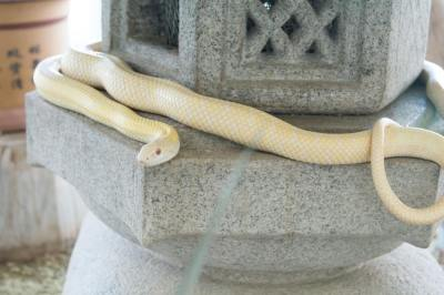 5分でわかる「白変種」「アルビノ」の違い!真っ白な美しい個体の謎を医学系研究アシスタントがわかりやすく解説