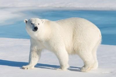 寒いところには大きな生き物?「ベルクマンの法則」を現役講師がサクッと解説!