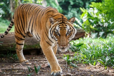 【故事成語】「虎を画きて狗に類す」の意味や使い方は?例文や類語を元広報紙編集者が解説!