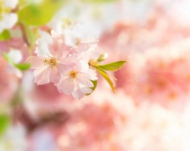 「花鳥風月」の意味と使い方・例文・類義語は?現役ライターがサクッと解説