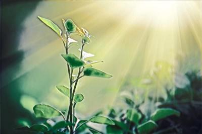 「植物の体のつくりと働き」を総確認!植物にはどんな器官・どんな種類があるの?現役講師が解説します