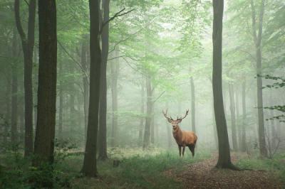 生態系の中での「分解者」とは?いないと困る超重要な存在!現役講師が解説します