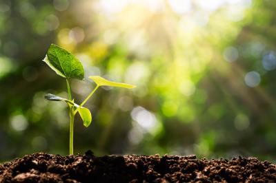植物の「分裂組織」とは?頂端分裂組織って何?現役講師が解説します