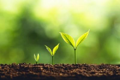 植物の「組織」を総まとめ!分裂組織と永久組織?現役講師がかんたん解説!