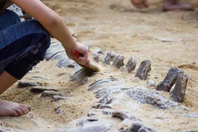 示相化石とはどんな化石?示準化石との違いや見分け方について地球科学専攻卒が5分でわかりやすく解説