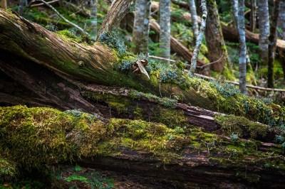 【慣用句】「枯れ木も山の賑わい」の意味や使い方は?例文や類語も含めて現役文系講師が詳しく解説!