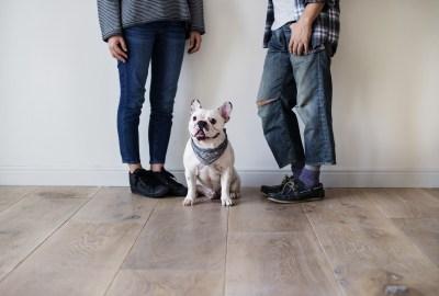 【慣用句】「夫婦喧嘩は犬も食わない」の意味や使い方は?例文や類語をWebライターが解説!
