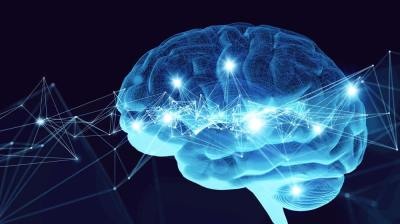 5分でわかる「大脳の機能」大脳辺縁系や大脳基底核などについて医学系研究アシスタントがわかりやすく解説