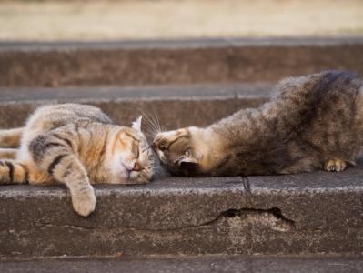 「微睡む」の意味や使い方は?例文や類語を日本文学科卒Webライターが解説!