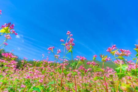 【慣用句】「高嶺の花」の意味や使い方は?例文や類語を読書好きWebライターが解説!