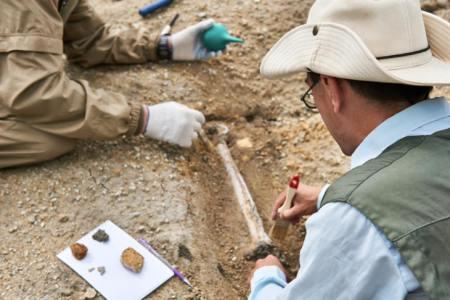 5分でわかる「示準化石」ってどんな化石?どんな種類があるの?科学館職員がわかりやすく解説