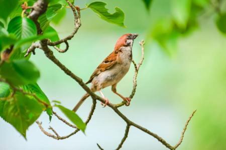 【慣用句】「竹に雀」の意味や使い方は?例文や類語をWebライターが解説!