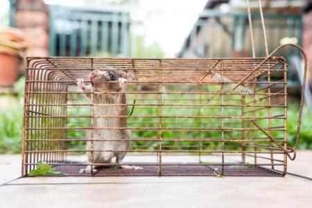 【慣用句】「袋の鼠」の意味や使い方は?例文や類語を元広告会社勤務ライターが解説!