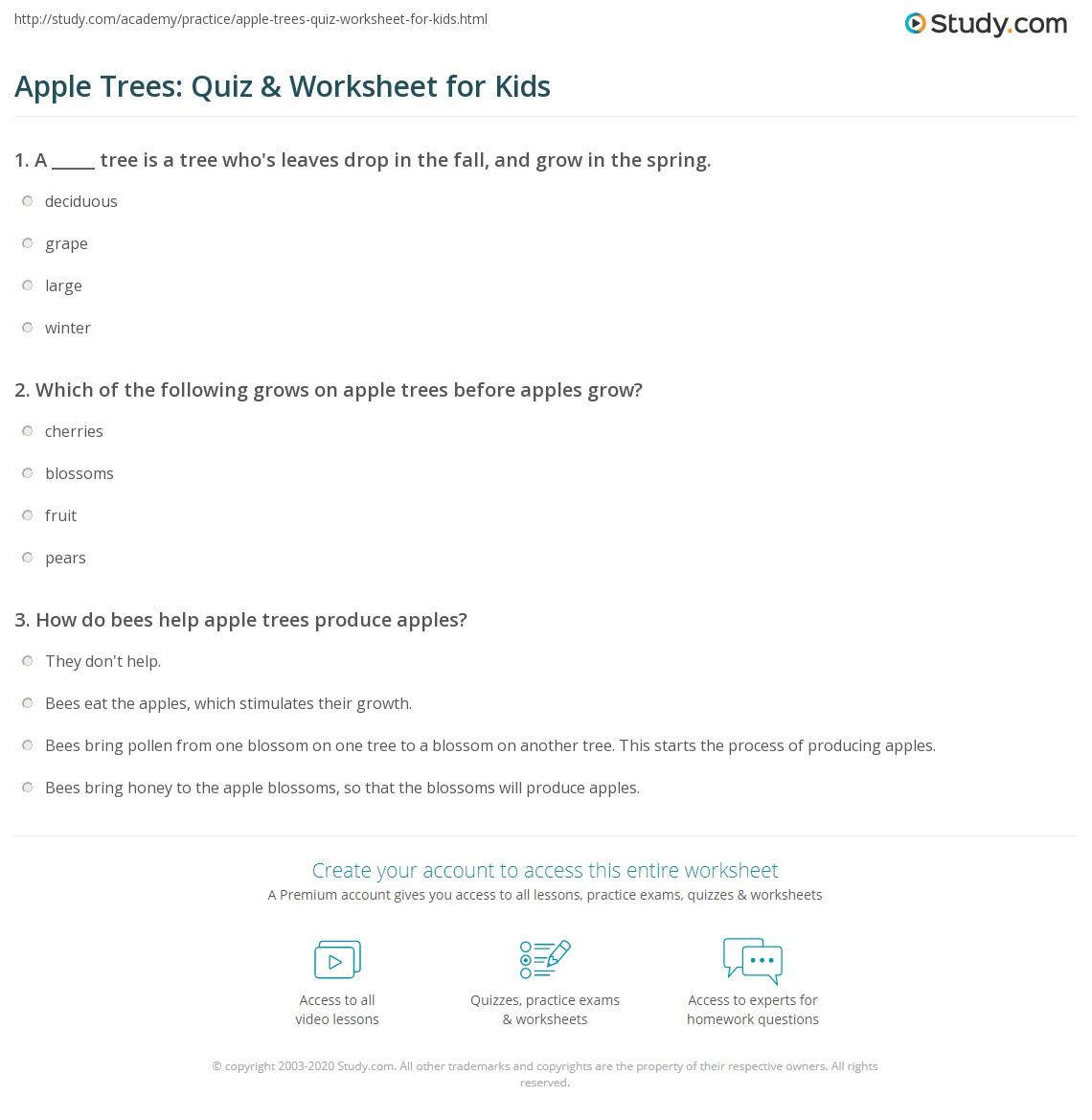 Apple Trees Quiz Amp Worksheet For Kids