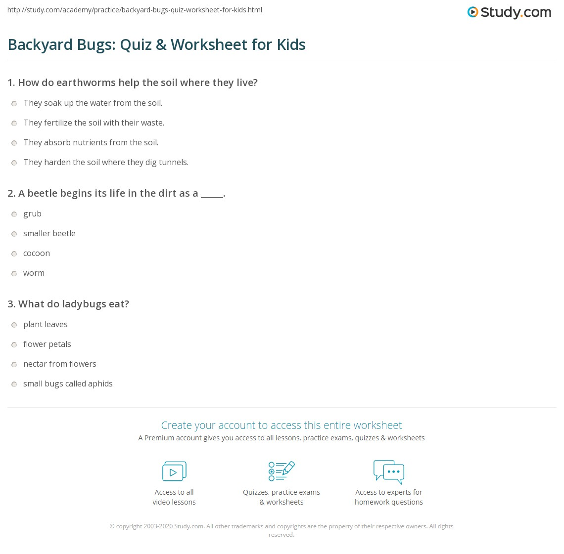 Backyard Bugs Quiz Amp Worksheet For Kids
