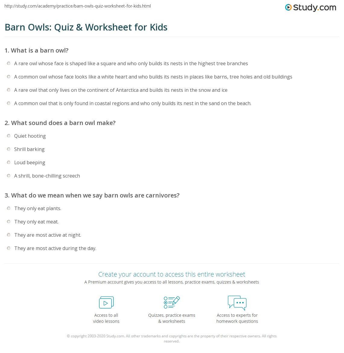 Barn Owls Quiz Amp Worksheet For Kids