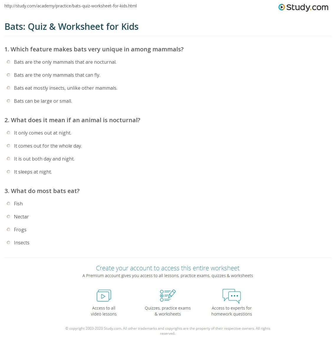 Bats Quiz Amp Worksheet For Kids