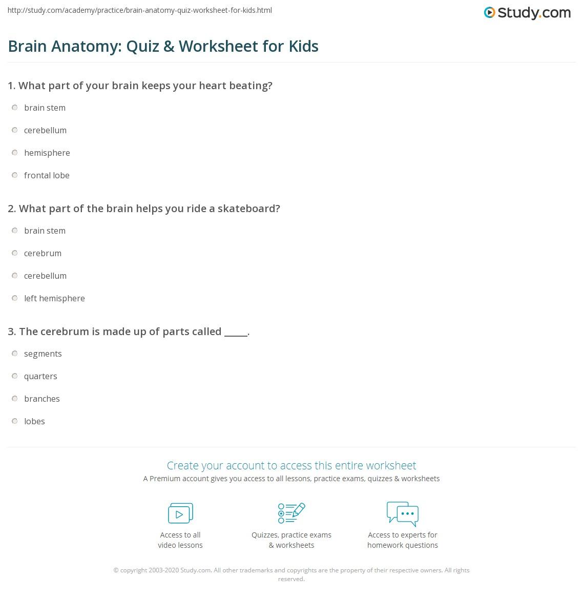 Brain Anatomy Quiz Amp Worksheet For Kids