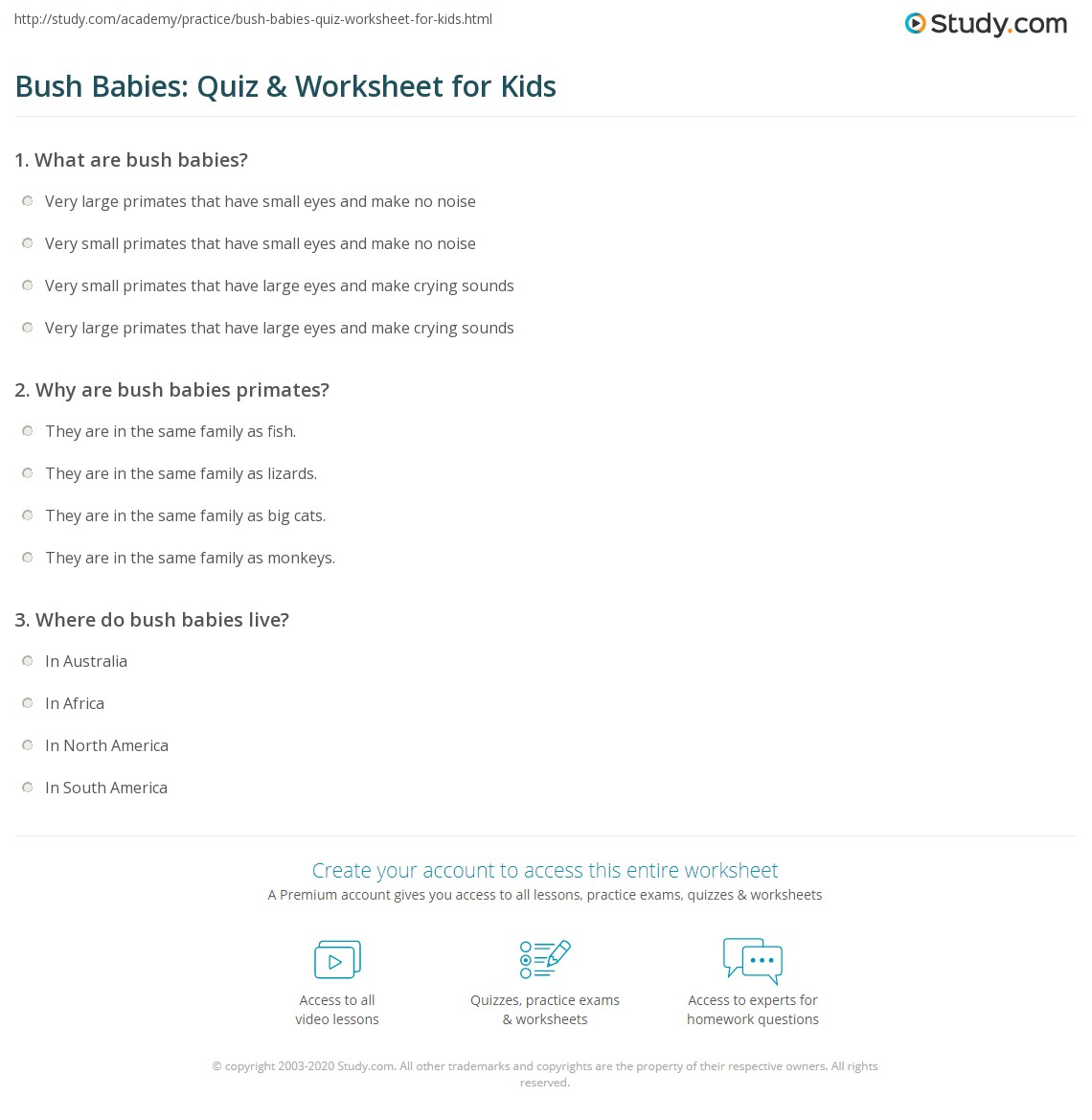 Bush Babies Quiz Amp Worksheet For Kids